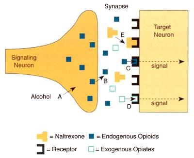 Combined oral contraceptive pill - Wikipedia